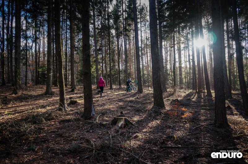 Suliwoods - trasy rowerowe Ślęża - las